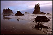 Beach with seastacks and reflections. Olympic National Park, Washington, USA. (color)