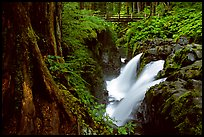 Pictures of Temperate Rainforests