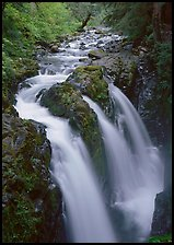 Sol Duc river and falls. Olympic National Park, Washington, USA. (color)