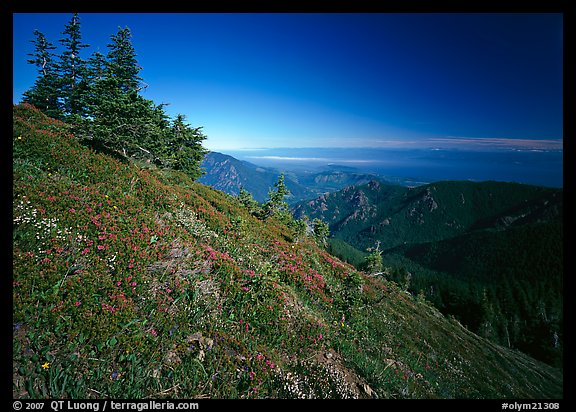 Looking towards  Strait of San Juan de Fuca from Hurricane hill. Olympic National Park (color)