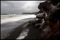 Driftwood and black pebble beach in stormy weather, Rialto Beach. Olympic National Park ( color)
