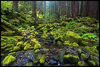 Stream flowing between mossy boulders in old growth forest. Olympic National Park ( color)