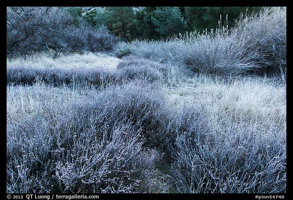 Winter frost on grasslands. Pinnacles National Park, California, USA.