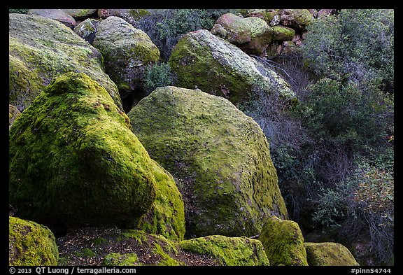 Boulders and trees in Bear Gulch. Pinnacles National Park (color)