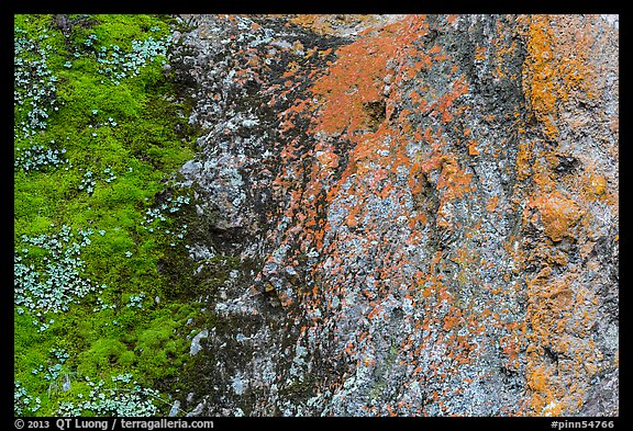 Green moss and orange lichen on rock wall. Pinnacles National Park, California, USA.