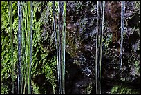 Icicles and moss, Balconies Cave. Pinnacles National Park, California, USA. (color)