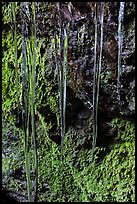 Icicles and mossy rocks, Balconies Caves. Pinnacles National Park, California, USA. (color)