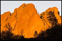 Trees against rocks glowing from sunset. Pinnacles National Park ( color)