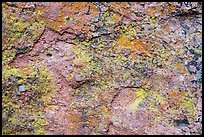 Multicolored lichen and rock. Pinnacles National Park, California, USA. (color)