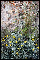 Yellow flowers and rock with lichen. Pinnacles National Park ( color)