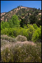 Wildflowers, trees, and hills in the hill. Pinnacles National Park ( color)