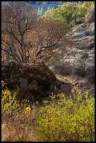 Rock and autumn foliage color along Chalone Creek. Pinnacles National Park, California, USA.