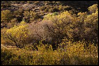 Fall foliage on creek and hill near Balconies. Pinnacles National Park ( color)