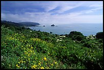 Wildflowers and Ocean, Del Norte Coast Redwoods State Park. Redwood National Park ( color)