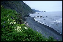 Coastline with black sand beach and wildflowers, Del Norte Coast Redwoods State Park. Redwood National Park ( color)