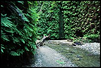 Fern Canyon with Fern-covered walls, Prairie Creek Redwoods State Park. Redwood National Park ( color)