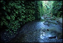 Fern-covered walls, Fern Canyon, Prairie Creek Redwoods State Park. Redwood National Park ( color)