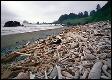 Driftwood, Hidden Beach. Redwood National Park ( color)