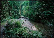 Fern Canyon, Prairie Creek Redwoods State Park. Redwood National Park ( color)