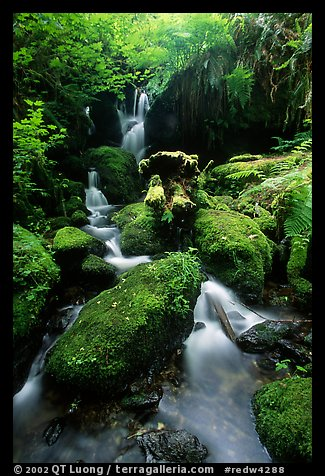Cascade and mossy rocks, Prairie Creek Redwoods State Park. Redwood National Park (color)