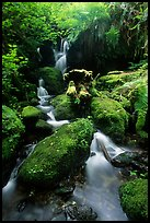 Cascade and mossy rocks, Prairie Creek Redwoods State Park. Redwood National Park ( color)