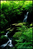 Waterfall, Prairie Creek Redwoods State Park. Redwood National Park ( color)