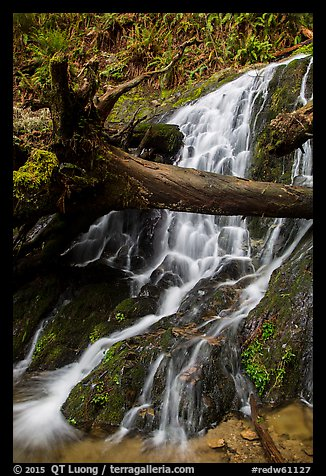 Fern Falls, Jedediah Smith Redwoods State Park. Redwood National Park (color)