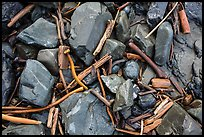 Close-up of driftwood, kelp, and rocks, Enderts Beach. Redwood National Park ( color)