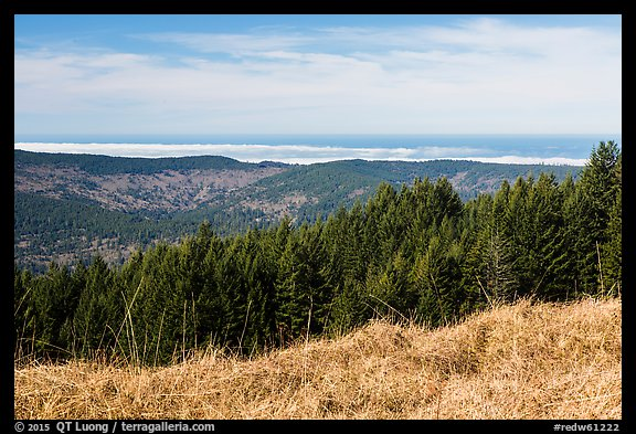 Grasses, trees, and distant Ocean from Dolason Prairie. Redwood National Park (color)