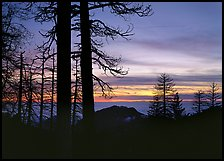 Bare trees in winter and sea of clouds at sunset. Sequoia National Park ( color)