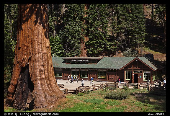 Giant Forest Museum. Sequoia National Park (color)