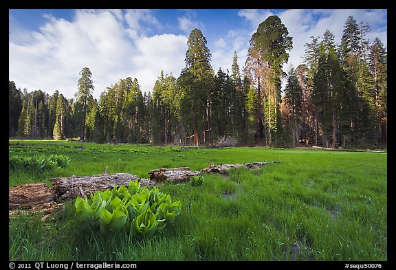 Crescent Meadow, late afternoon. Sequoia National Park, California, USA.