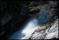 Tree and water flowing in gorge, Marble Fall. Sequoia National Park ( color)