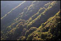 Forested canyon slopes, Marble fork of Kaweah River. Sequoia National Park ( color)