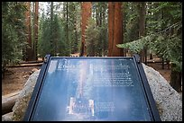 Largest tree on earth interpretive sign. Sequoia National Park ( color)