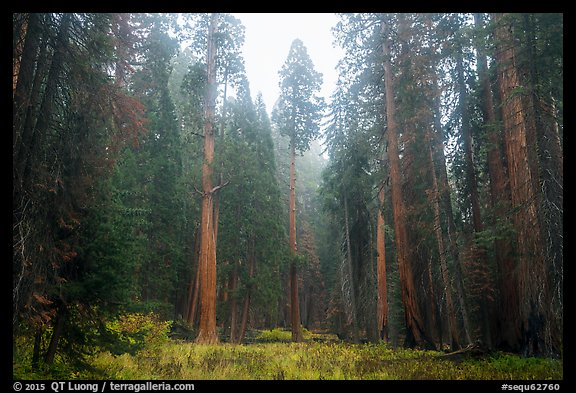 Meadow surrounded by sequoia trees in autum, Giant Forest. Sequoia National Park (color)