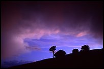 Pine and glacial erratics, dusk, Olmsted point. Yosemite National Park ( color)