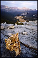 Tuolumne Meadows seen from Fairview Dome, autumn evening. Yosemite National Park ( color)