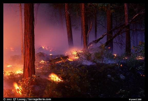 Forest fire. Yosemite National Park, California, USA.