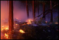 Forest fire. Yosemite National Park ( color)