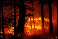 Prescribed fire. Yosemite National Park ( color)