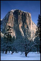 West face of El Capitan in winter. Yosemite National Park ( color)