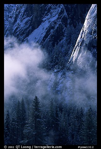 Pines, mist, and Cathedral Rocks. Yosemite National Park, California, USA.