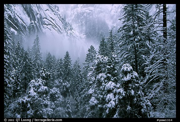 Forest with snow and fog near Vernal Falls. Yosemite National Park, California, USA.