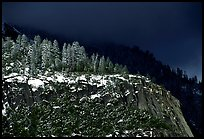 Pine trees on Valley rim, winter. Yosemite National Park ( color)