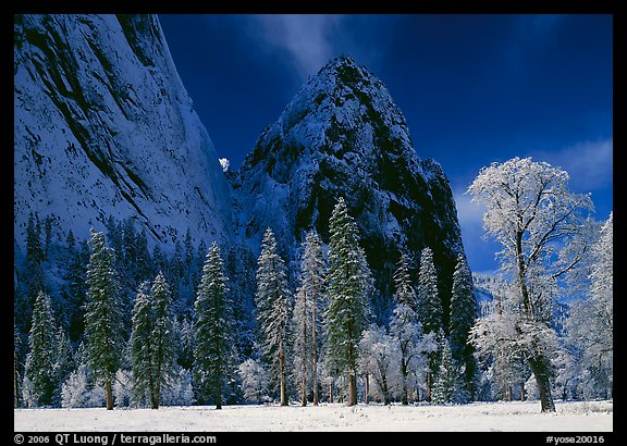 Frozen trees and Cathedral Rocks, early morning. Yosemite National Park, California, USA.