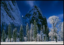 Frozen trees and Cathedral Rocks, early morning. Yosemite National Park, California, USA. (color)