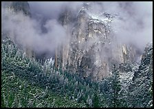 Trees, cliffs and mist. Yosemite National Park ( color)