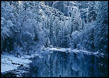 Snowy trees and rock wall reflected in Merced River. Yosemite National Park ( color)