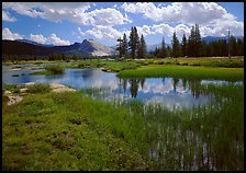 Spring pond in Tuolumne Meadows and Lambert Dome. Yosemite National Park ( color)